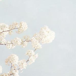 cropped-Spring-Is-Here1.jpg