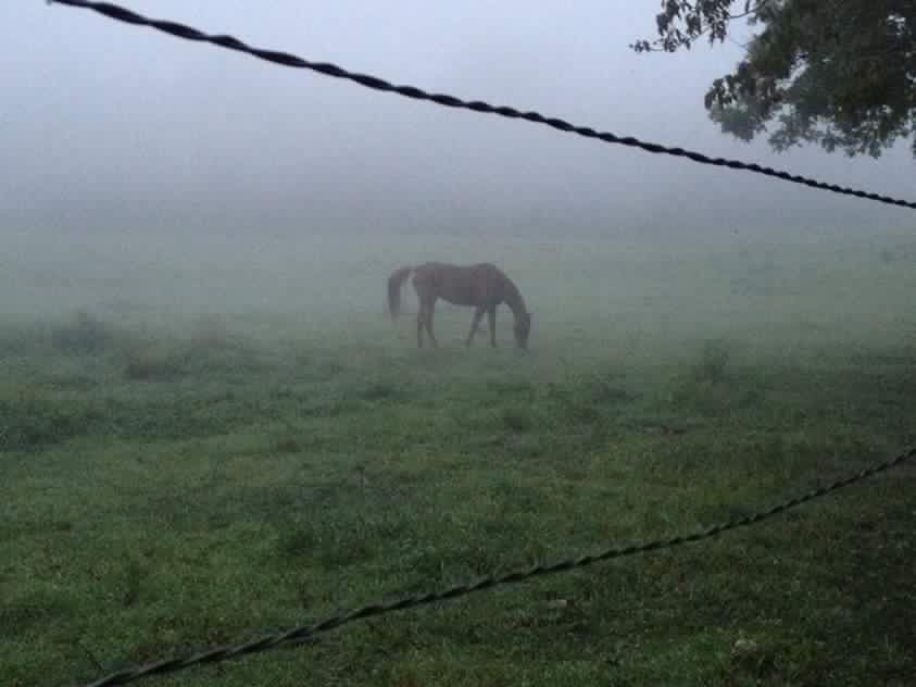 Horse in pasture early morning fog